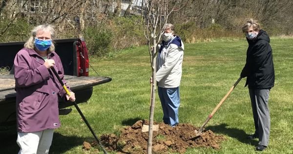 new trees for the motherhouse and what they might suggest Because the Sisters of Saints Cyril and Methodius have lived in Danville, PA for over 100 years, it is occasionally necessary to replace the trees that have died. Recently a couple donated two red maples, acer rubrum, which were planted on a lawn above a stream.